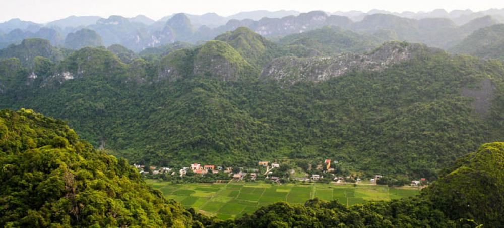 Restoration call for area 'the size of China' to protect falling biodiversity and food insecurity