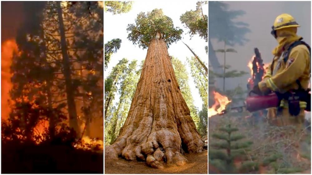 California fire crew attempts to safeguard about 2,500-year-old General Sherman tree