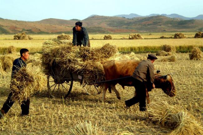 UN concerned over prevalent malnutrition in DPR Korea