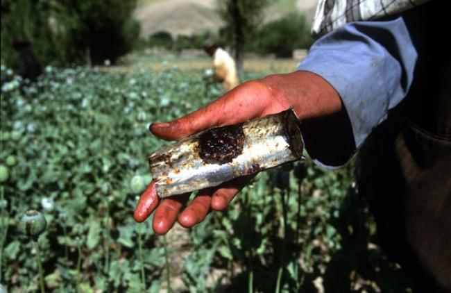 In Afghanistan, UN crime chief pledges support to combat 'disastrous' drug trade, corruption