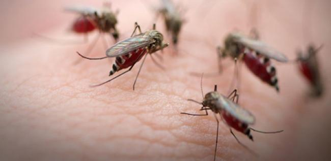 World Malaria Day: UN seeks near zero preventable deaths