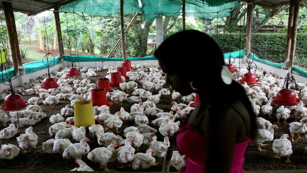 UN health agency recommends farmers stop using antibiotics in healthy animals