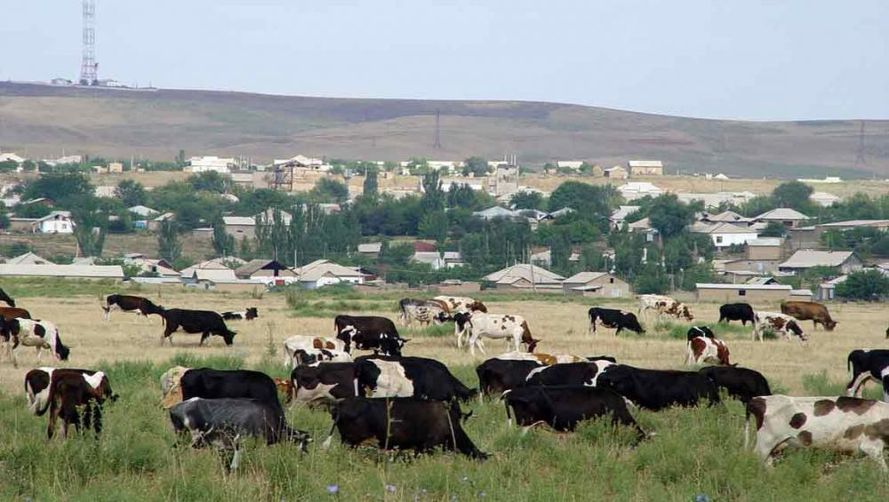 UN and partners launch plan to stop transmission of bovine tuberculosis to humans