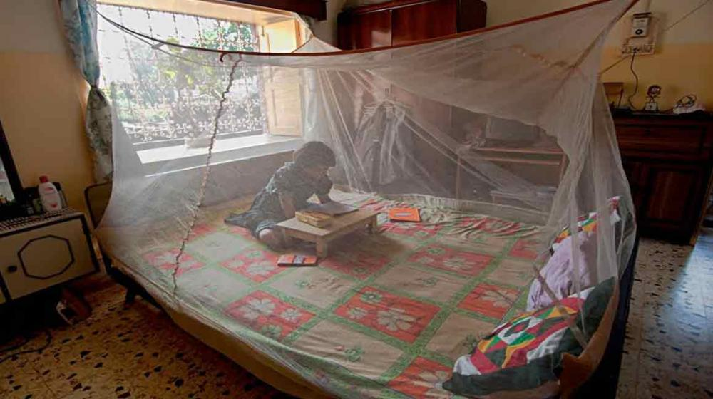 Ahead of World Malaria Day, UN says 'let's close the gap' in prevention coverage