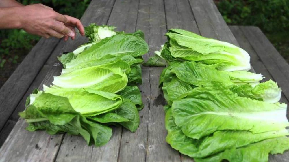 Five dead as major E. coli outbreak hits US