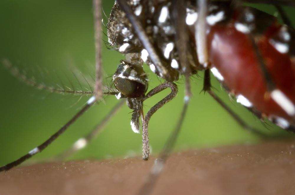 West Nile fever killed 15 people in Greece since start of 2019 - Healthcare Organization
