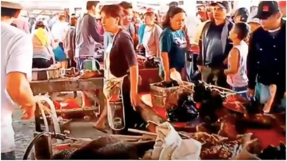 Research finds thousands of wild animals were sold at Wuhan markets in months before Covid-19 outbreak