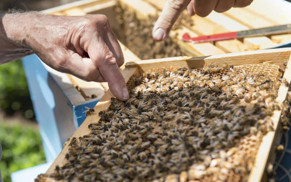 Beehives installed on UNHQ grounds