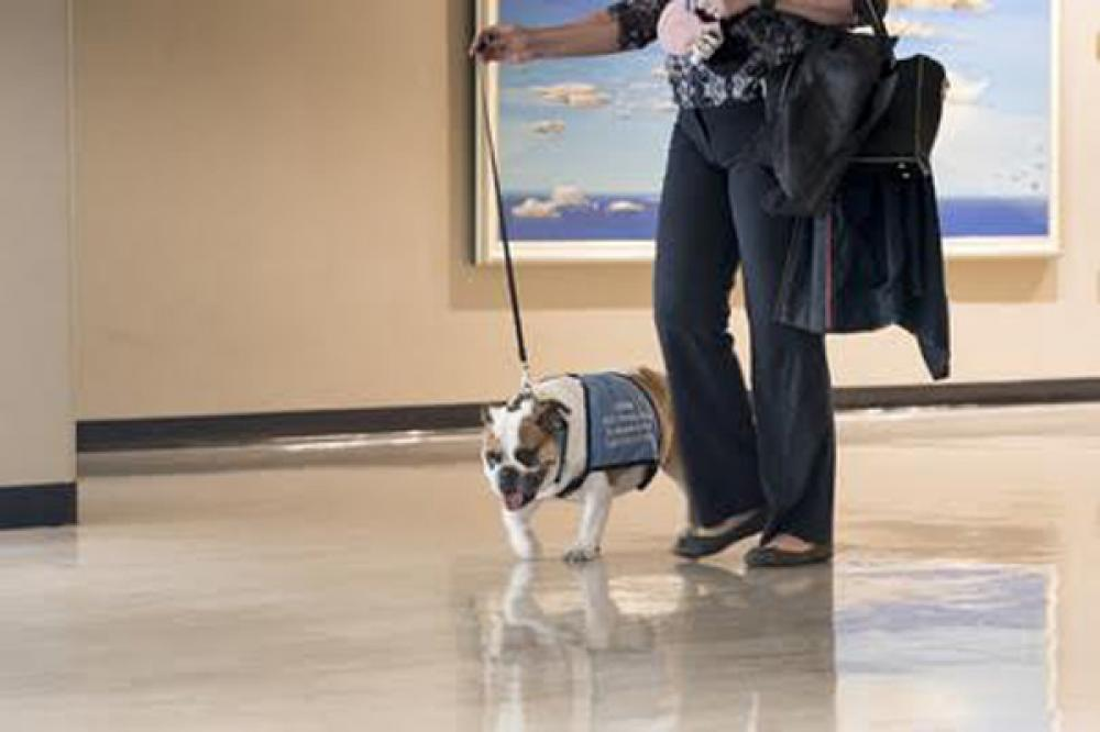 Chloe the Therapy Dog at UN Headquarters