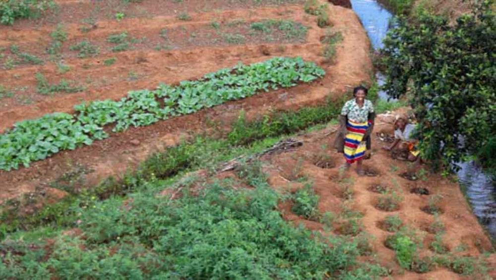 On International Day, UN highlights rural women's participation in sustainable, climate-resilient agricultural